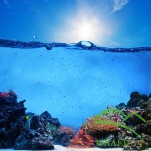 Коралловый риф Красного моря