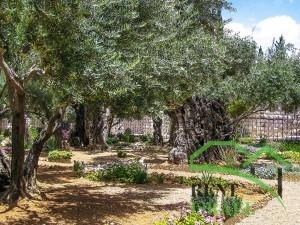 Великолепный Гефсиманский сад