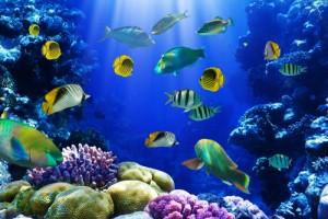 Красочное Красное море